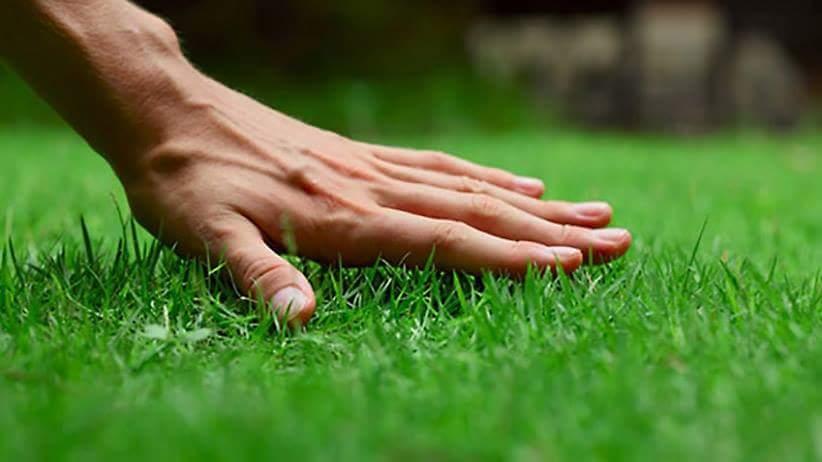 jak podlewać trawnik